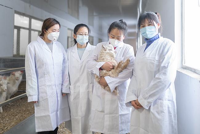 昭乌达羊绒-育种研发团队