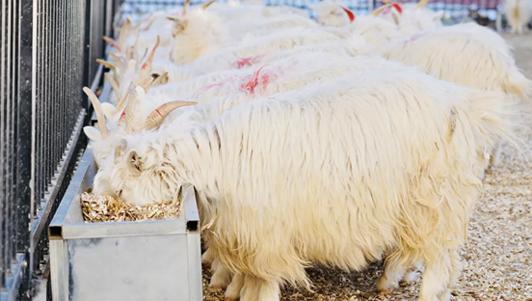赤峰昭乌达羊绒育种研究中心