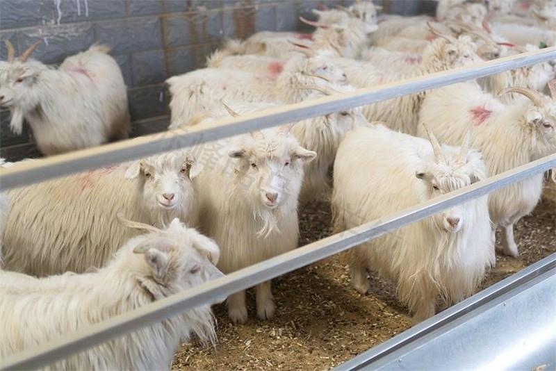 羊绒衫厂家