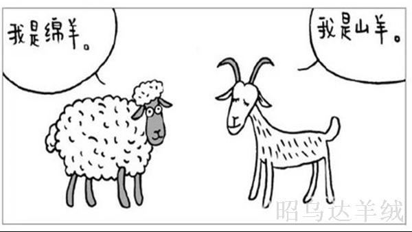 羊绒制品OEM/ODM厂家昭乌达羊绒教您如何分辨羊绒与羊毛