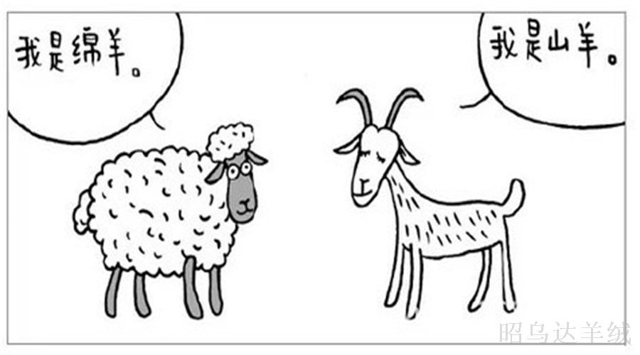 羊绒与羊毛的区别