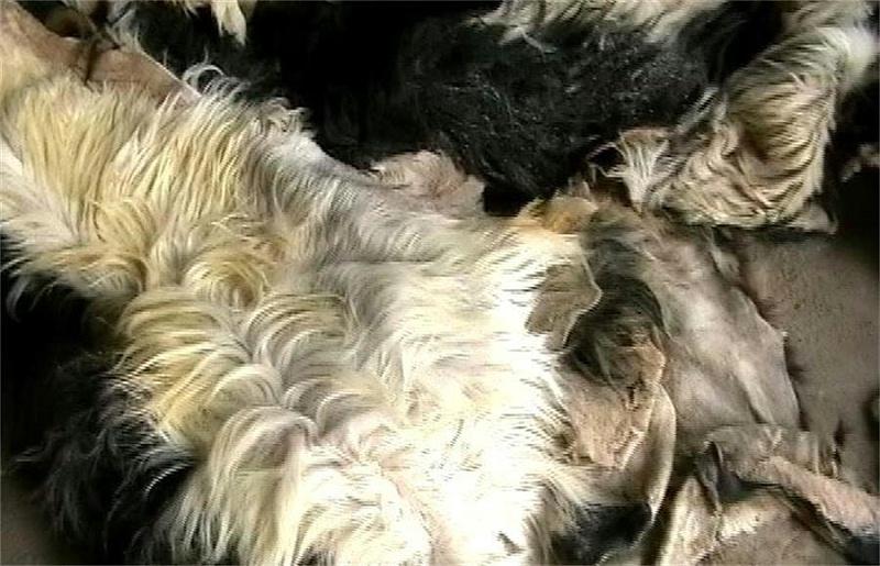 羊绒衫加工皮褪绒